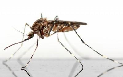 Príčina, ktorá mení marketingovú komunikáciu na otravného komára, ktorý lezie ľuďom na nervy (A čo robiť namiesto toho)
